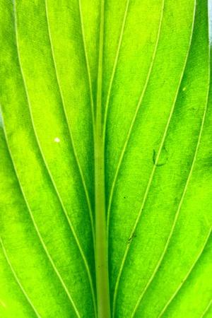 summer green leaf macro close up photo