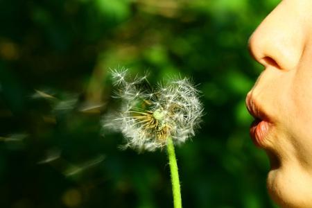 dandelion flower: wish girl blow on dandelion flower Stock Photo