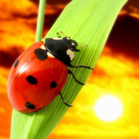 sunrise ladybug macro close up photo