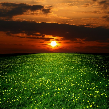 dandelion landscape under sunset sky photo