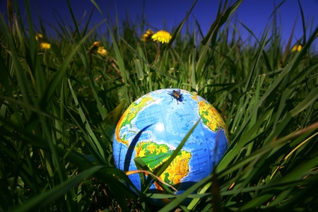 globe of planet earth in green grass Stock Photo - 8585535
