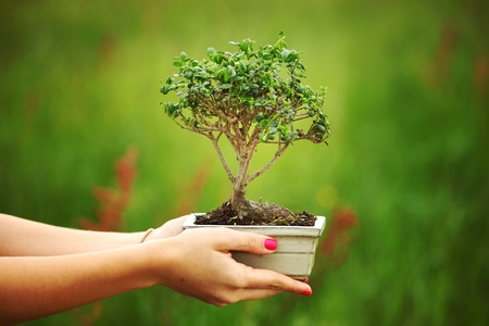 bonsai in hands on green grass background Stock Photo - 8675810