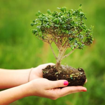 Bonsai en manos sobre fondo verde hierba