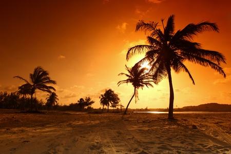 strand australie: Palm in gele sunrise sky