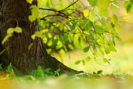 close up autumn trees in park