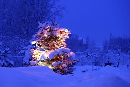 xmas winter pine tree in dark photo