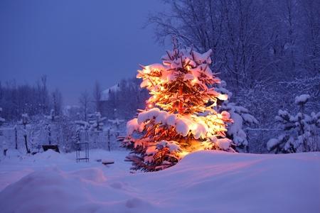 xmas winter pine tree in dark Stock Photo - 8678591