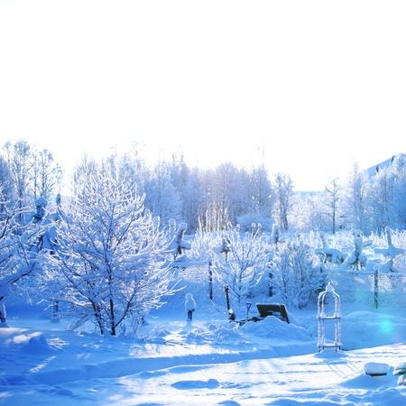 january sunrise: bosque de pinos en nieve Foto de archivo