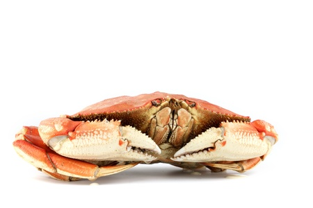 dungeness: dungeness crab isolated on white Stock Photo