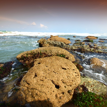 Reef stones an ocean water Stock Photo - 8739937