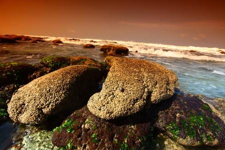 Reef stones an ocean water Stock Photo - 8739663