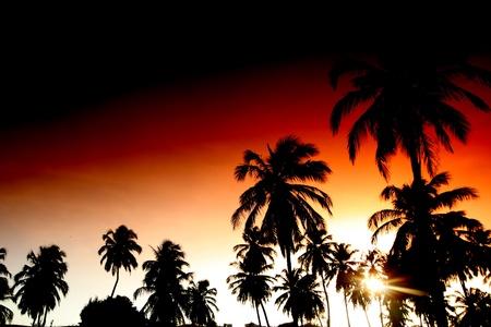 palm in yellow sunrise sky Stock Photo - 8739904