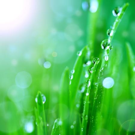 brillance goutte d'eau dans la lumi?re du soleil