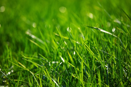 green grass macro close up photo