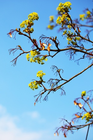 branches on a background of blue sky Stock Photo - 8743418