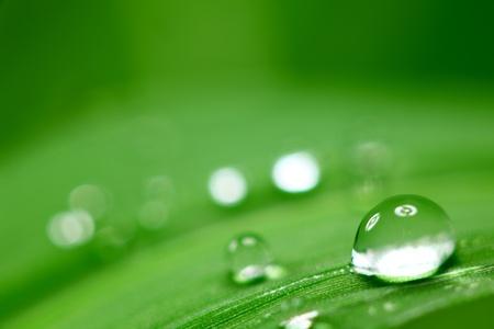dews: big water drop on grass blade Stock Photo