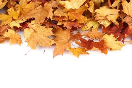 october calendar: autumn leaves isolated in studio Stock Photo