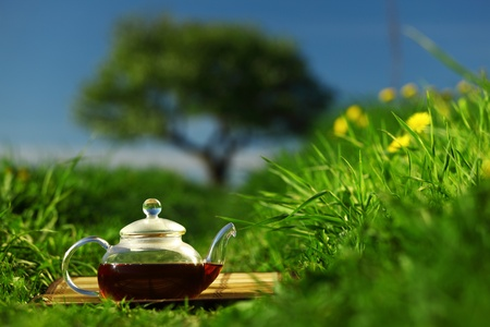 Natural tea in the pot photo
