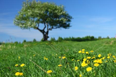 alone tree on green grass field photo