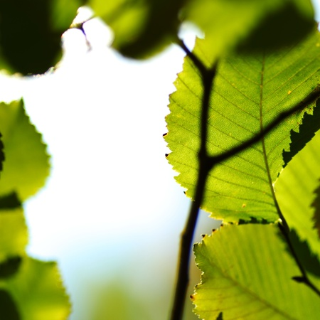 autumn leaves macro close up photo