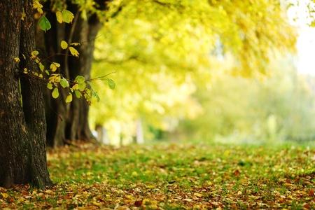 autumn scene: autumn park orange leaf around