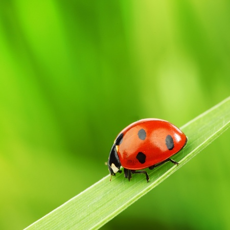 ladybug on grass nature background Stok Fotoğraf