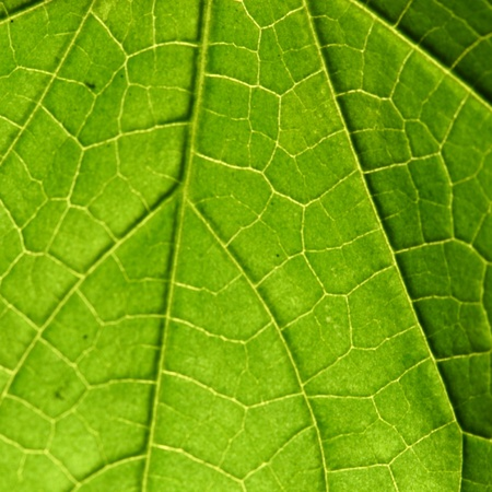 leaf close up: green leaf close up nature background Stock Photo
