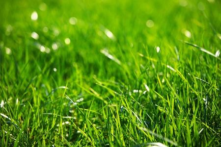 green grass macro close up photo