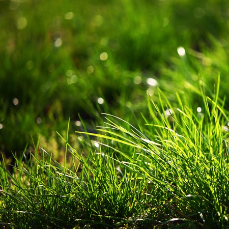 green grass macro close up Stock Photo - 8746130