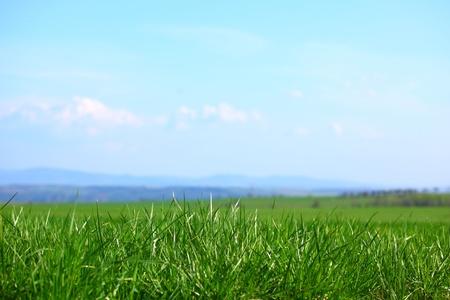 green grass under blue sky Stock Photo - 8746090