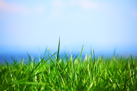 green grass under blue sky Stock Photo - 8746132