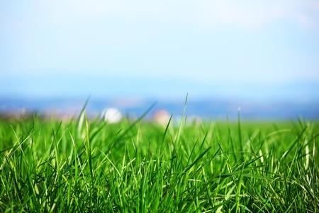 green grass under blue sky photo