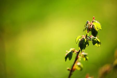 green foliage branch close up Stock Photo - 8746158