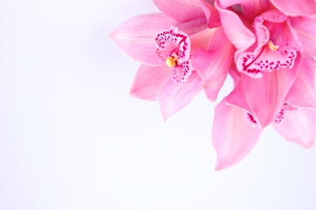 orchid isolated on white background photo
