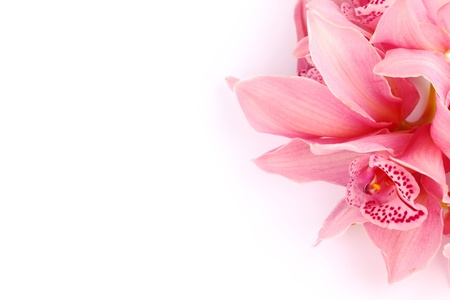 beautiful pink white flower: orchid isolated on white background Stock Photo