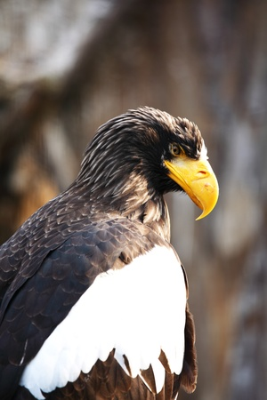 eagle in zoo macro close up Stock Photo - 8746129