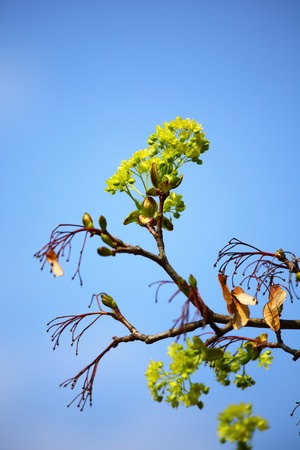 branches on a background of blue sky Stock Photo - 8746120