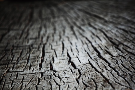 wood background macro close up Stock Photo - 8763344
