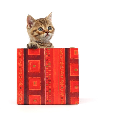 cat in gift box isolated on white background Stock Photo - 8751146