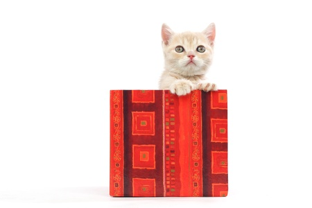 cat in gift box isolated on white background Stock Photo - 8751141