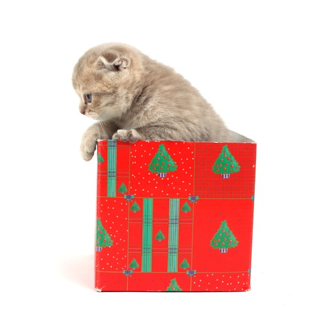 cat in gift box isolated on white background photo