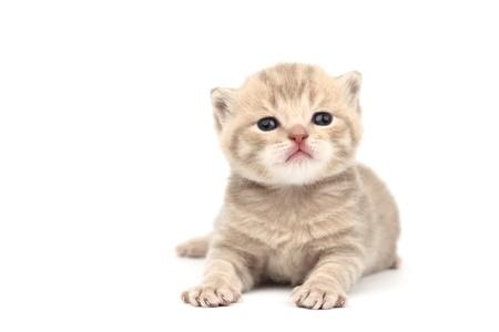 cat isolated on white background Stock Photo - 8819509