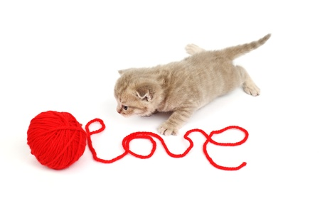 cat and wool sign love Stock Photo - 8819525