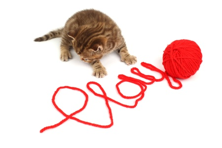 cat  play in red wool Stock Photo - 8819526