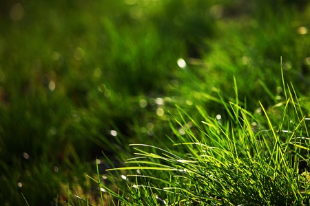 green grass macro close up Stock Photo - 8820103