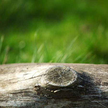 arbol de problemas: madera en fondo de naturaleza de hierba Foto de archivo