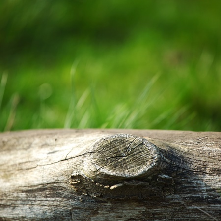 wood lawn: wood in grass nature background Stock Photo