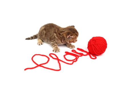 cat  play in red wool Stock Photo - 8810888