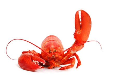 hi: hello lobster isolated on white background