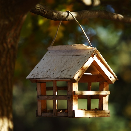 birdhouse in the autumn forest close up photo